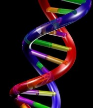 Jan. 2013 | International Workshop on Genetic Instability and its Consequences