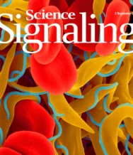 Phosphorylation of the TATA-binding protein activates the spliced leader silencing pathway in Trypanosoma brucei